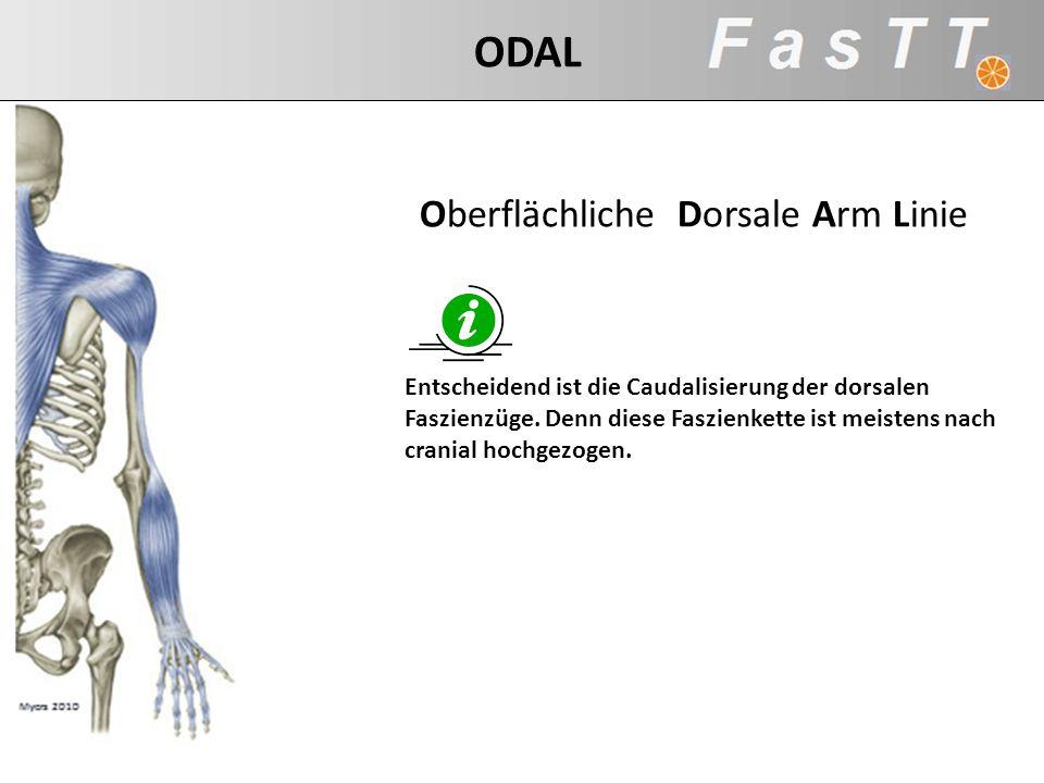 Oberflächliche Dorsale Arm Linie