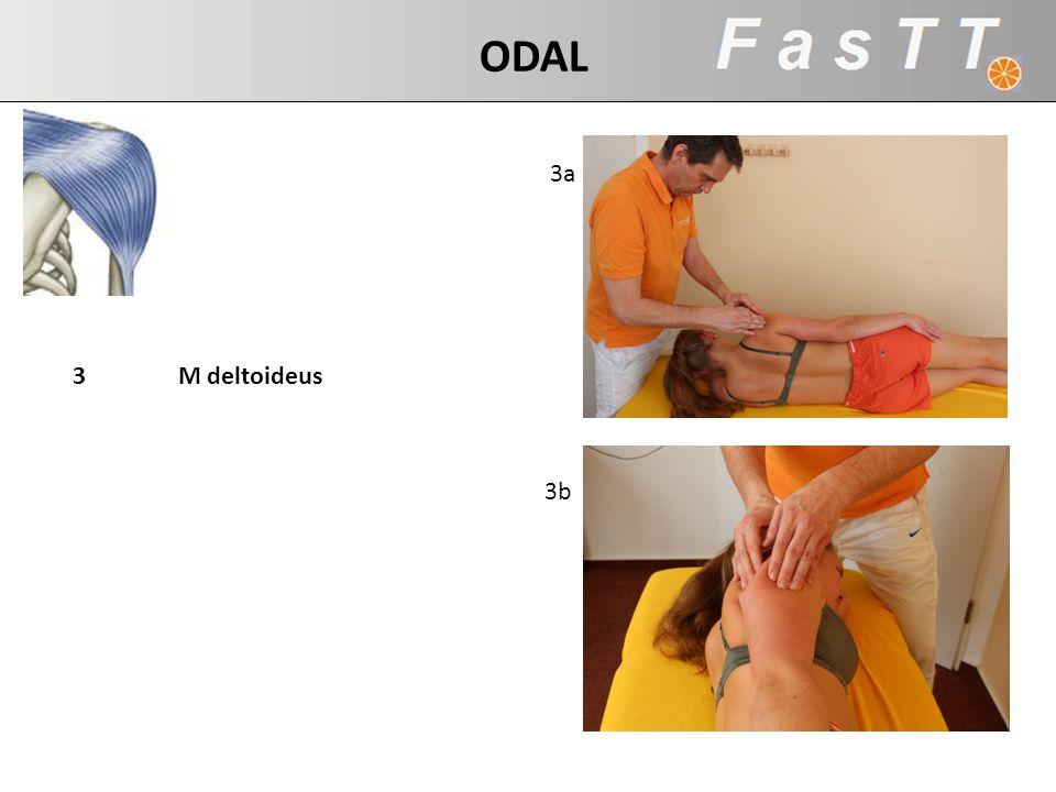 ODAL 3a 3 M deltoideus 3b Akt Bew: Ellenbogen Richtung Decke bewegen
