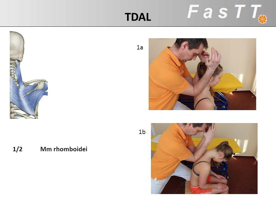 TDAL 1a 1b Mm Rhomboidei 1/2 Mm rhomboidei