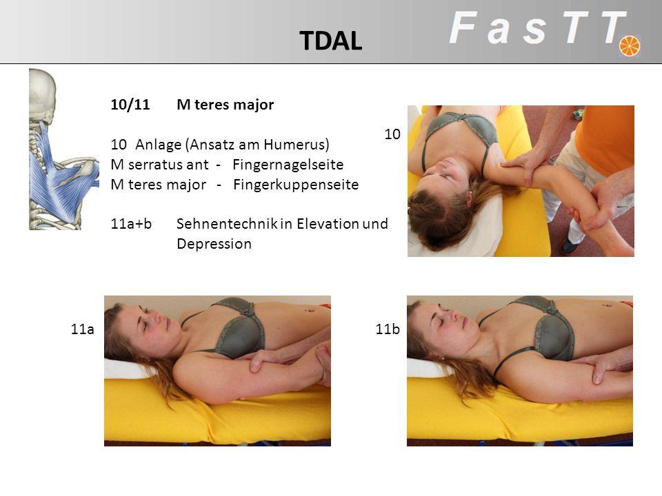 TDAL 10/11 M teres major Anlage (Ansatz am Humerus)