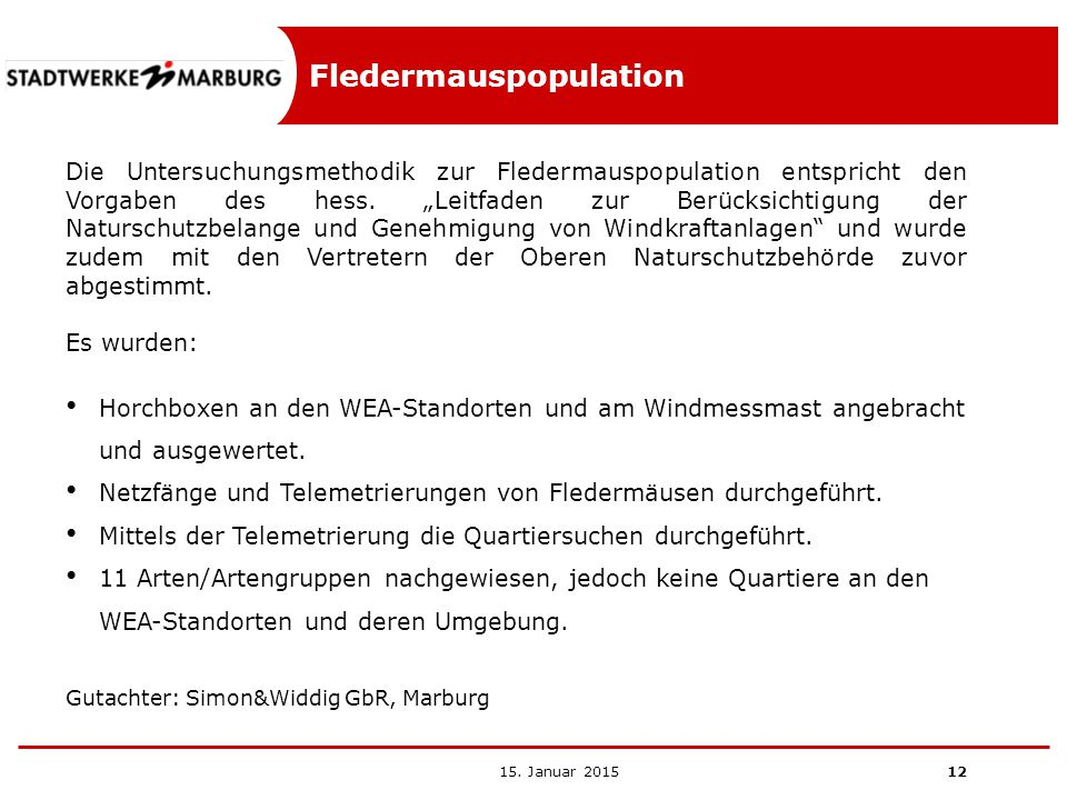 Fledermauspopulation
