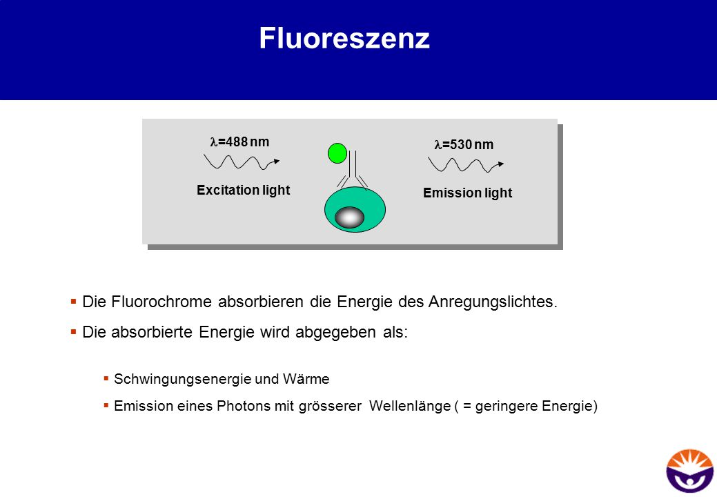 Fluoreszenz l=488 nm. l=530 nm. Excitation light. Emission light. Die Fluorochrome absorbieren die Energie des Anregungslichtes.