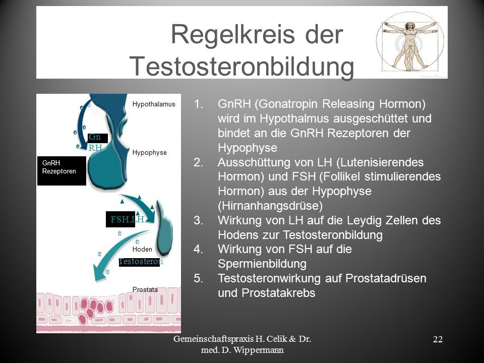 Regelkreis der Testosteronbildung