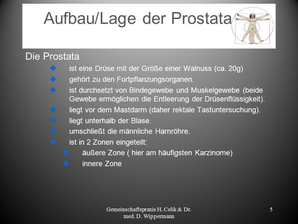 Aufbau/Lage der Prostata