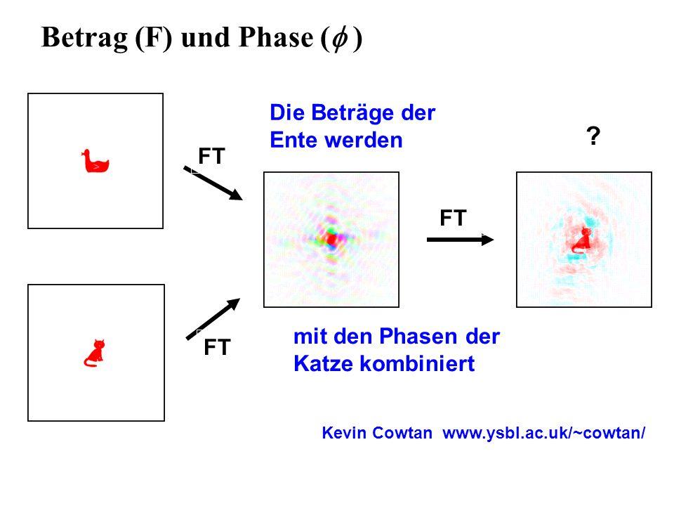Betrag (F) und Phase ( )