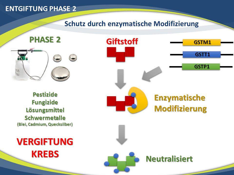 Schutz durch enzymatische Modifizierung (Blei, Cadmium, Quecksilber)
