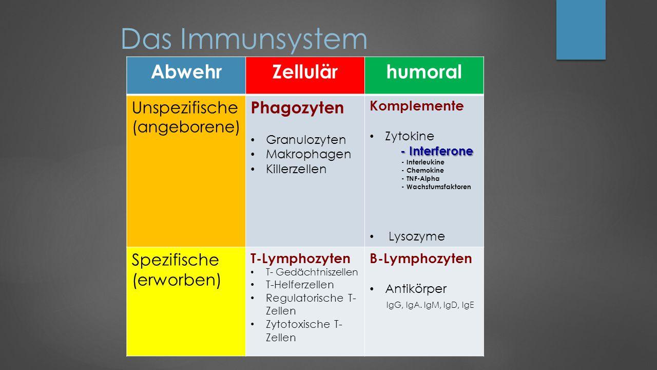 Das Immunsystem Abwehr Zellulär humoral Unspezifische Phagozyten