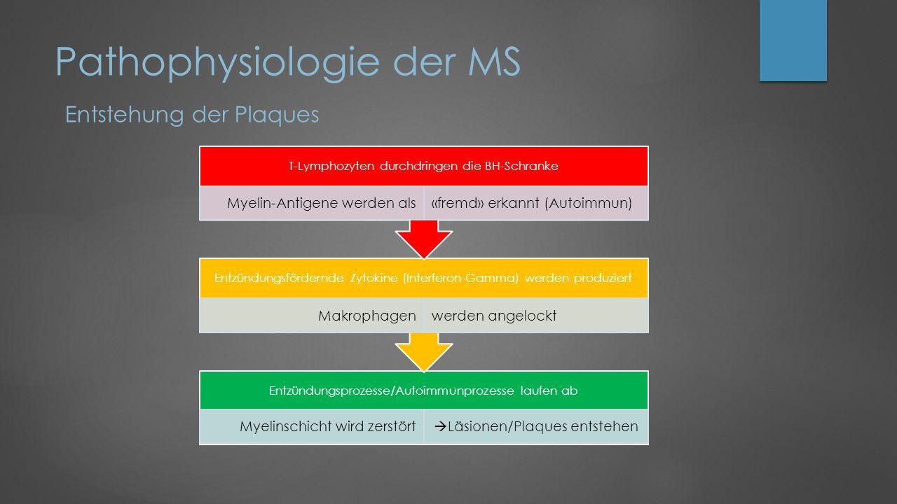 Pathophysiologie der MS Entstehung der Plaques