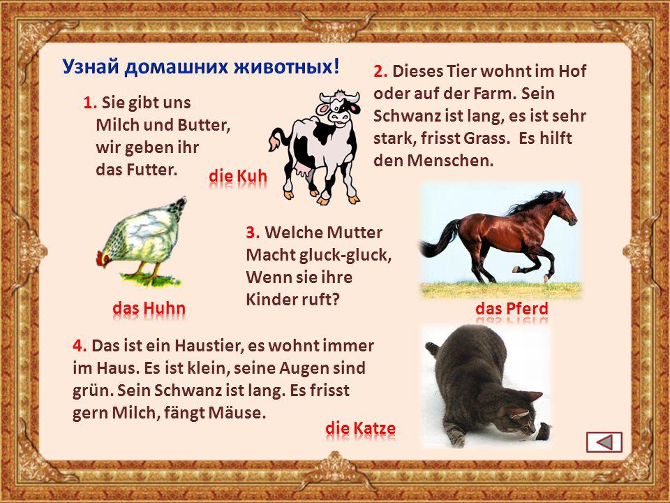 Узнай домашних животных!