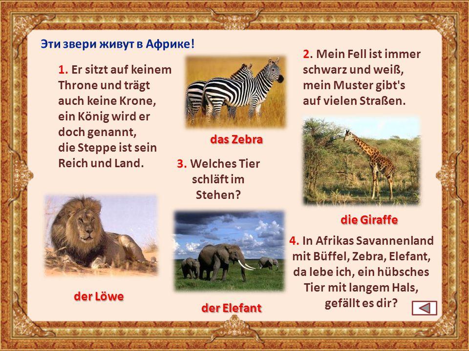 Эти звери живут в Африке! 2. Mein Fell ist immer schwarz und weiß,