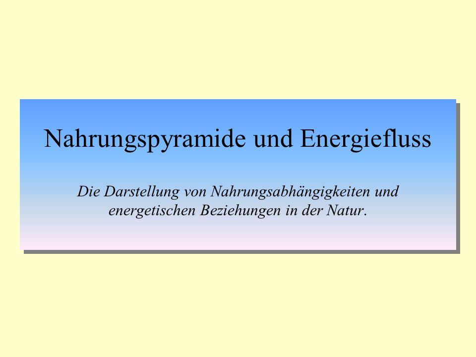 Nahrungspyramide und Energiefluss