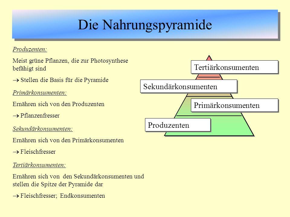 Die Nahrungspyramide Tertiärkonsumenten Sekundärkonsumenten
