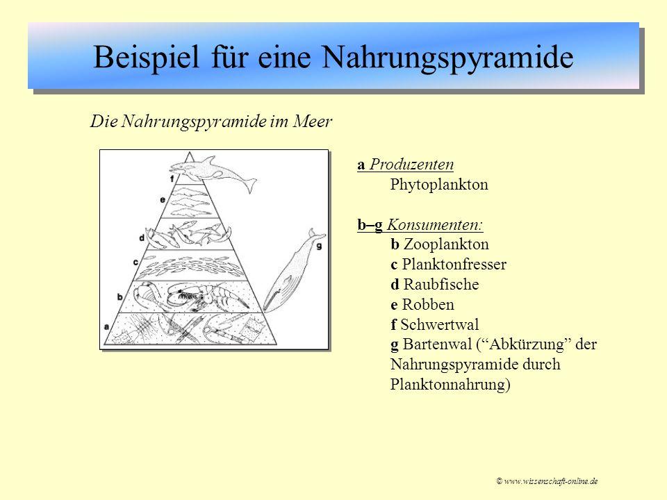 Beispiel für eine Nahrungspyramide