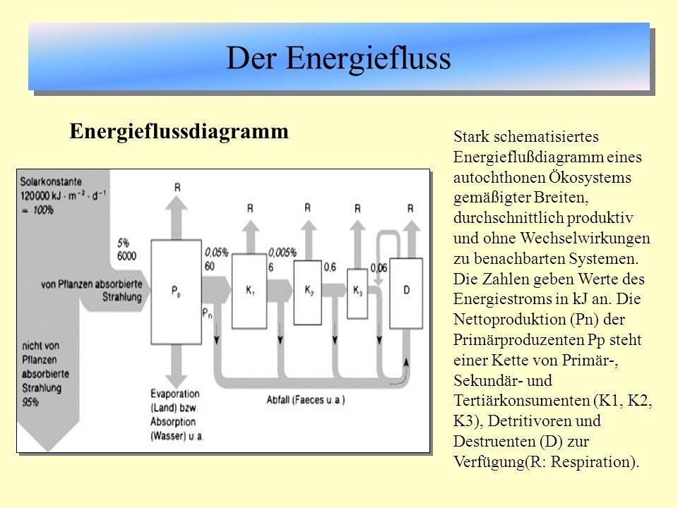 Der Energiefluss Energieflussdiagramm