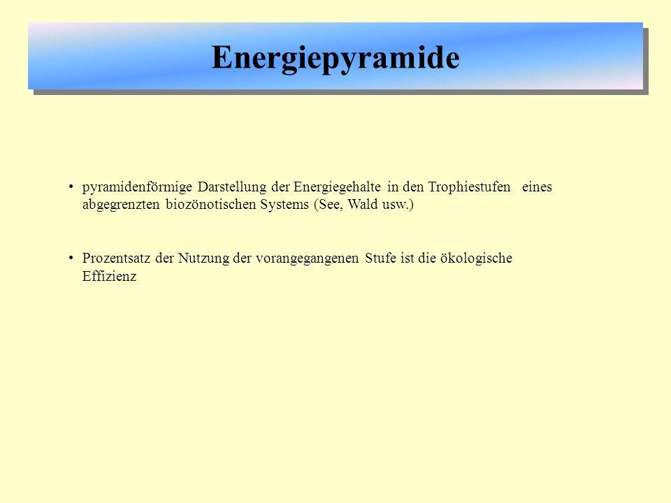 Energiepyramide pyramidenförmige Darstellung der Energiegehalte in den Trophiestufen eines abgegrenzten biozönotischen Systems (See, Wald usw.)