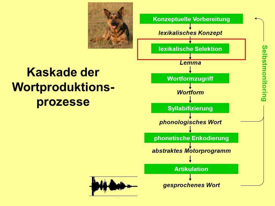 Kaskade der Wortproduktions- prozesse