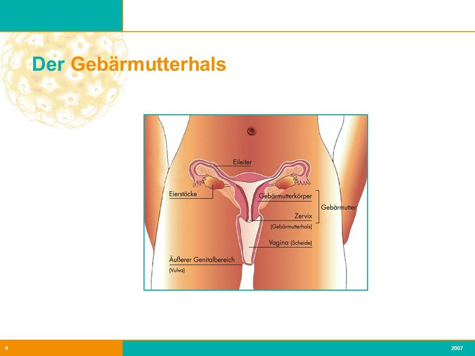 Der Gebärmutterhals