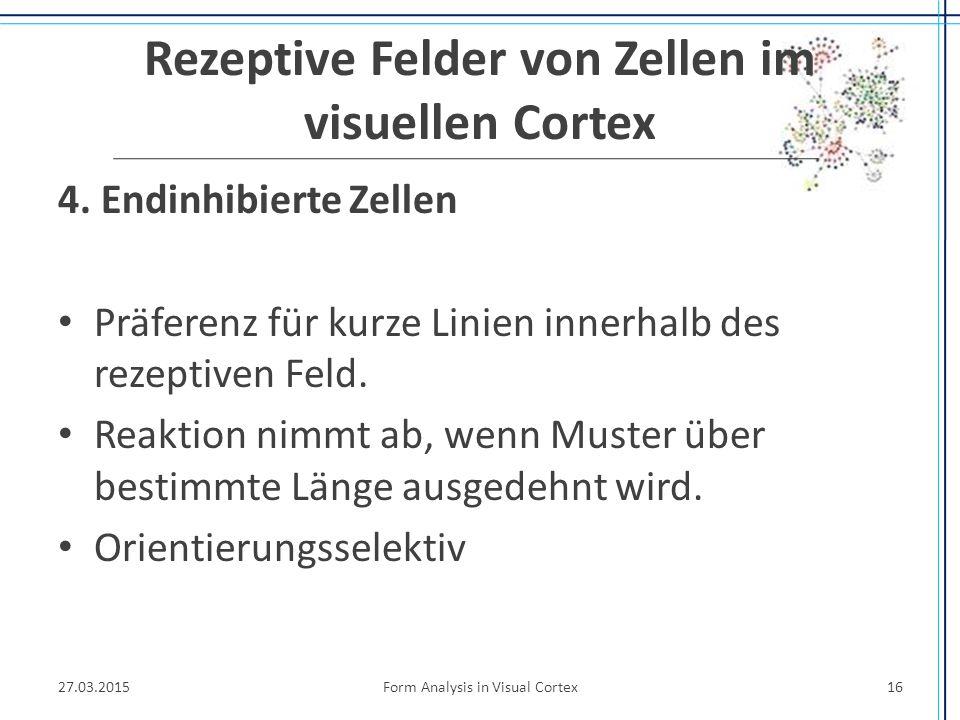 Rezeptive Felder von Zellen im visuellen Cortex