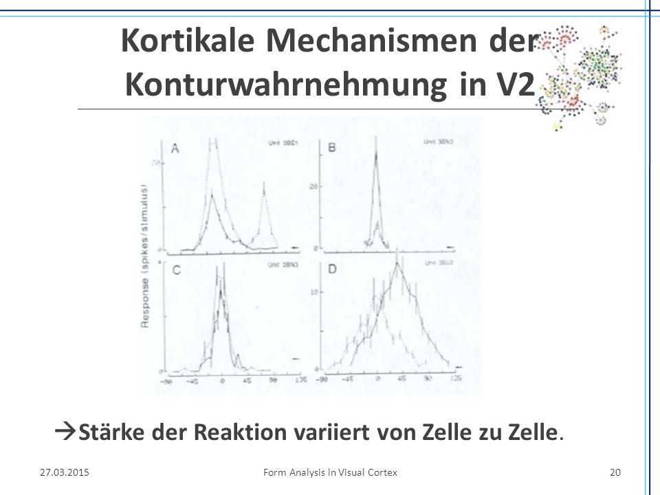 Kortikale Mechanismen der Konturwahrnehmung in V2