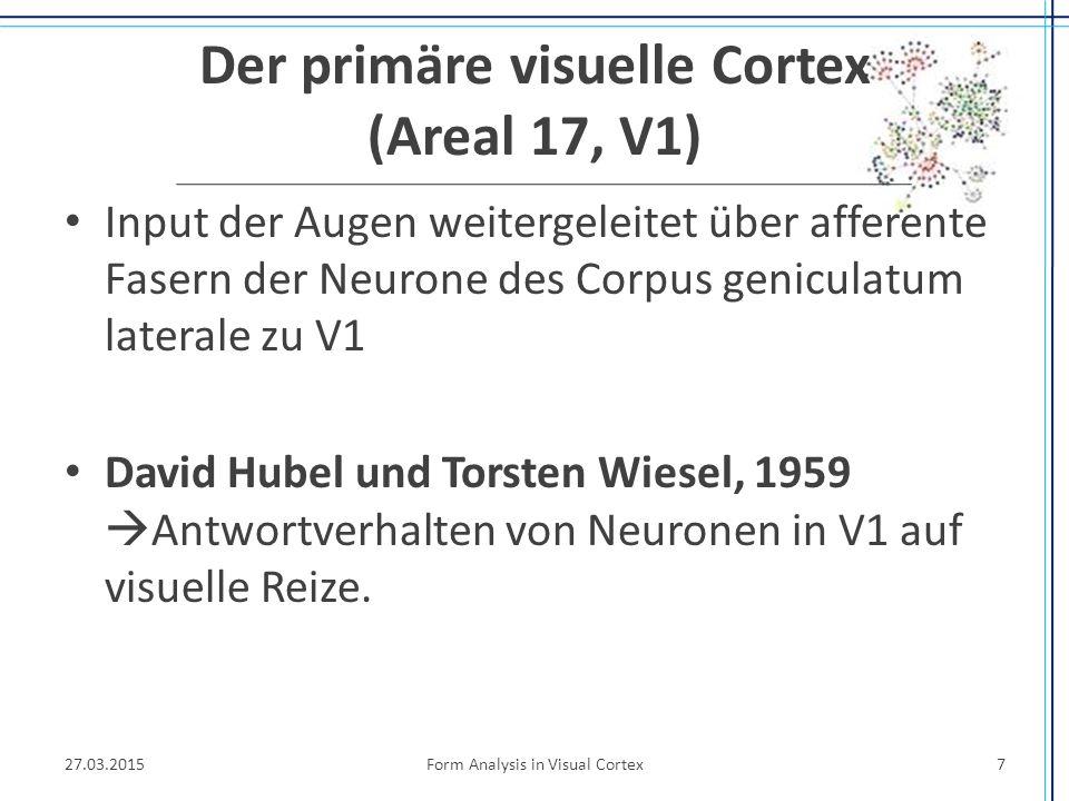 Der primäre visuelle Cortex (Areal 17, V1)