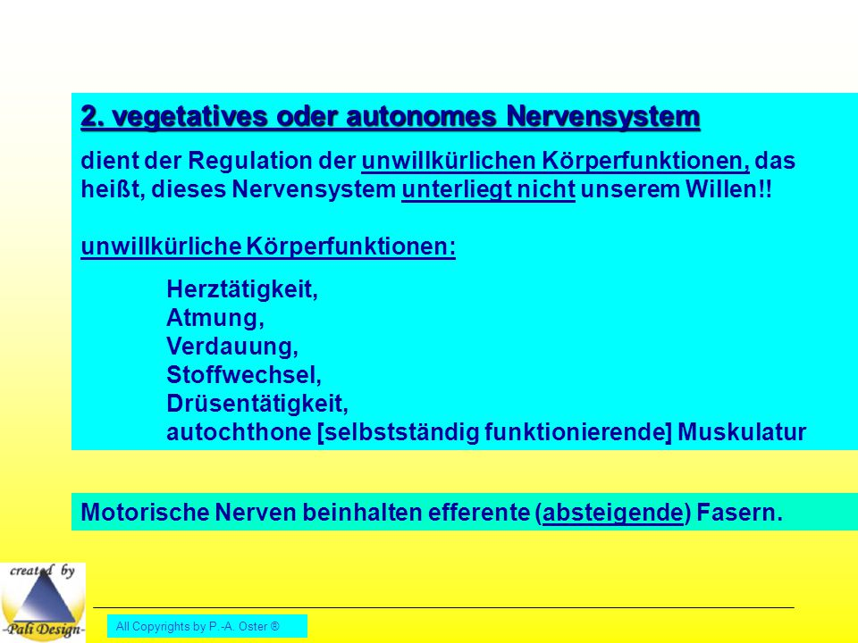 2. vegetatives oder autonomes Nervensystem