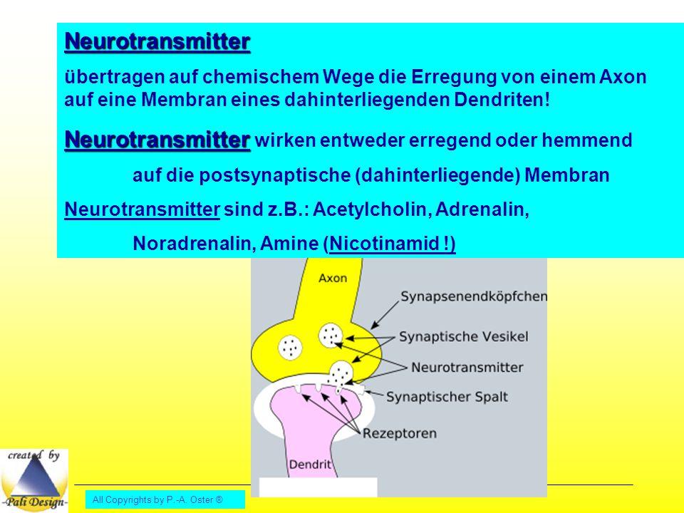 Neurotransmitter wirken entweder erregend oder hemmend