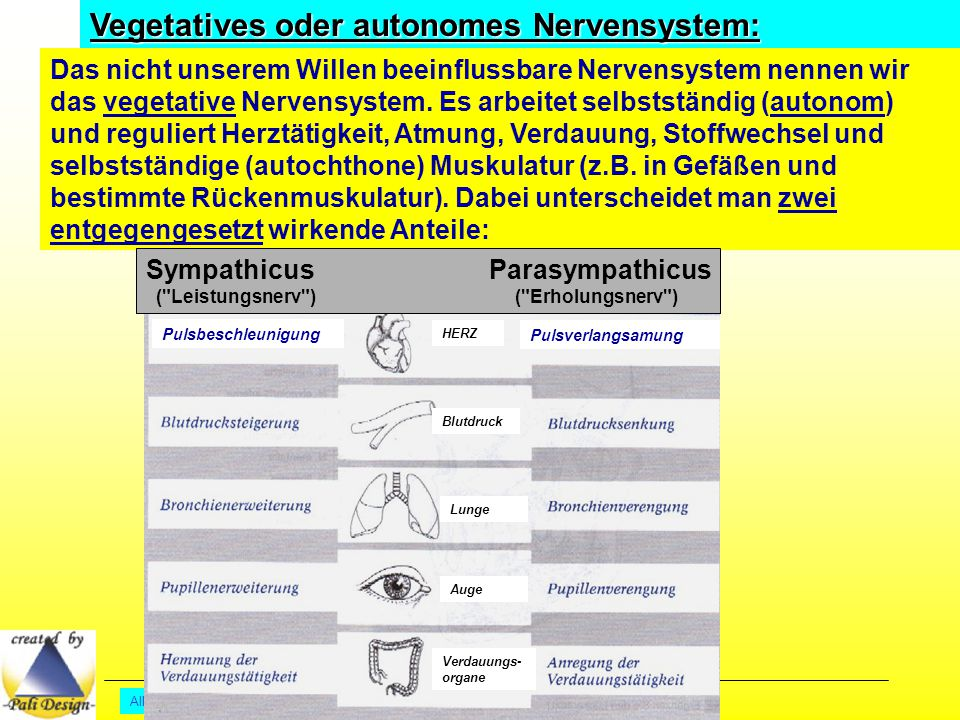 Vegetatives oder autonomes Nervensystem: