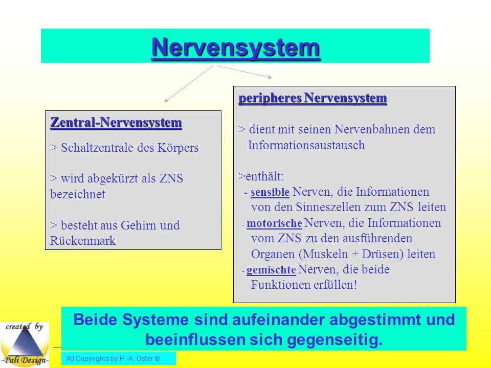 Nervensystem peripheres Nervensystem. > dient mit seinen Nervenbahnen dem Informationsaustausch.