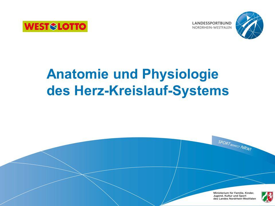 Anatomie und Physiologie des Herz-Kreislauf-Systems