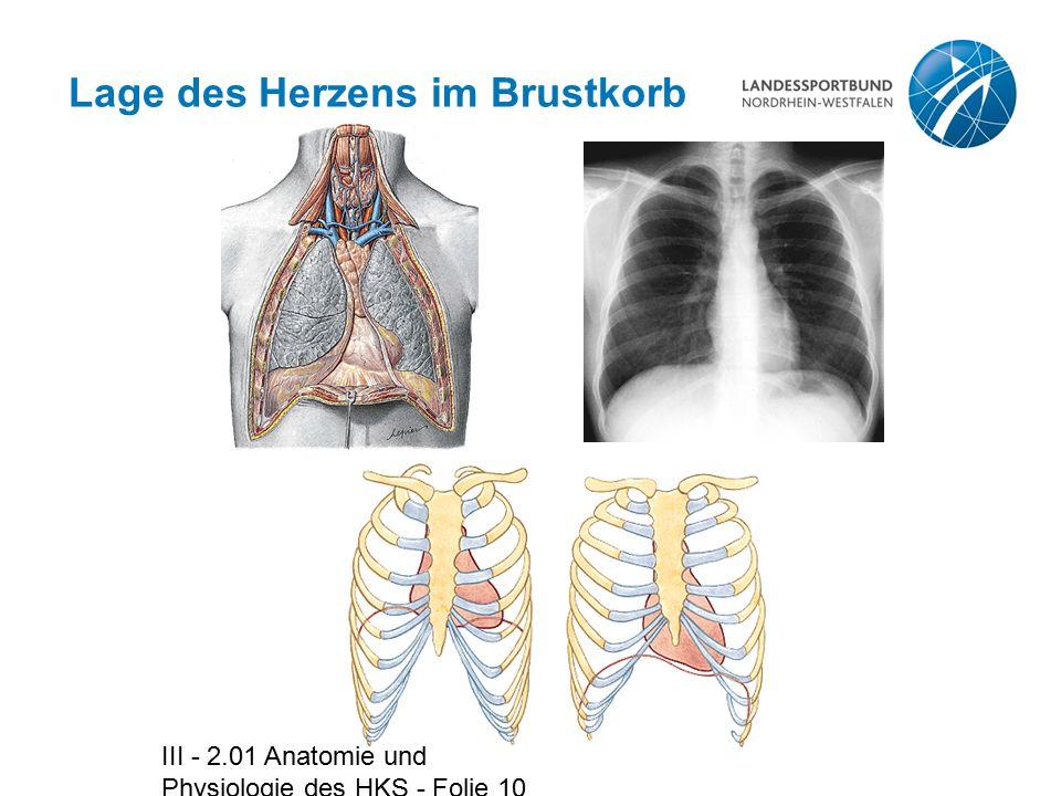 Lage des Herzens im Brustkorb