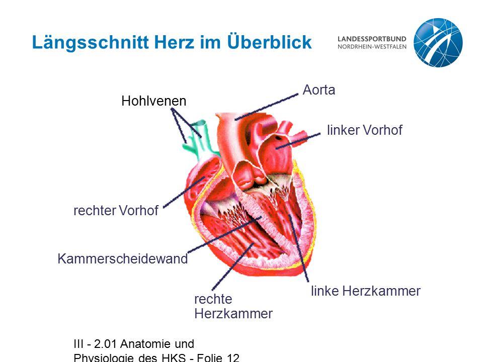 Längsschnitt Herz im Überblick