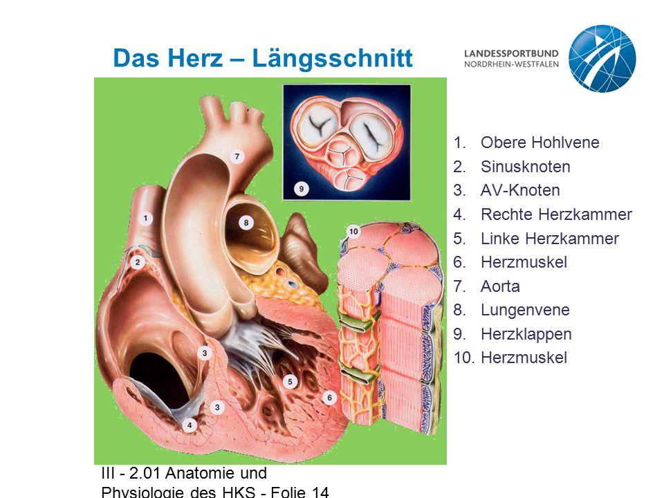 Charmant Av Knoten Anatomie Fotos - Menschliche Anatomie Bilder ...
