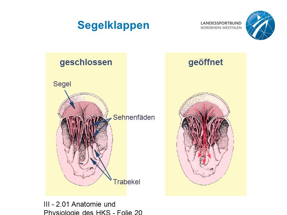 Groß Blutfluss Anatomie Zeitgenössisch - Menschliche Anatomie Bilder ...