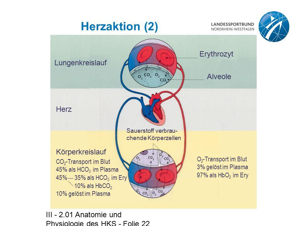 Herzaktion (2) Erythrozyt Lungenkreislauf Alveole Herz Körperkreislauf