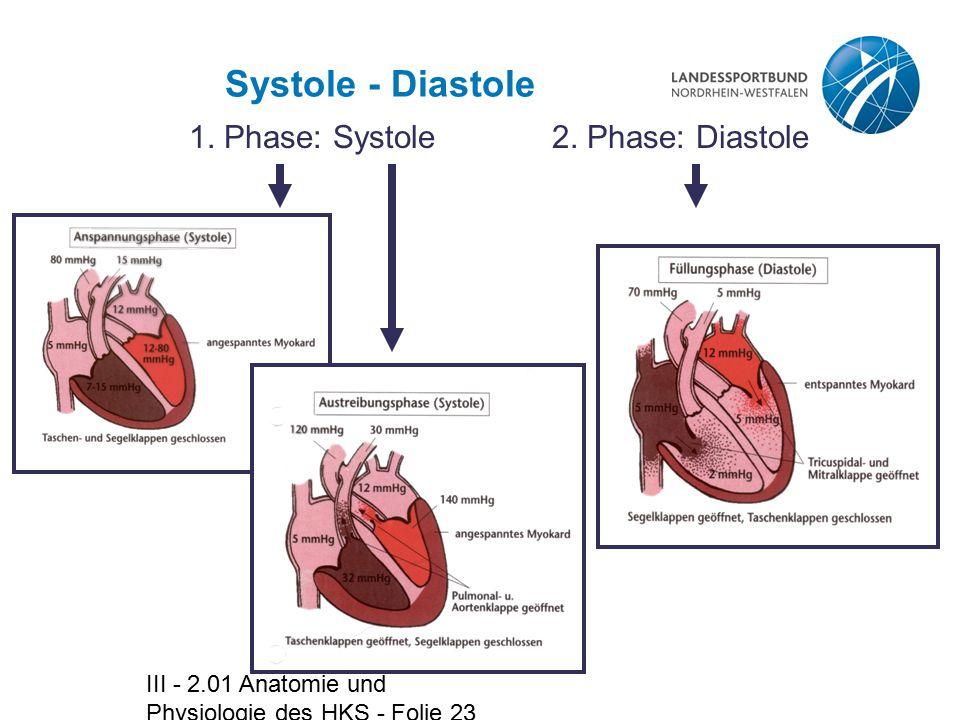 Systole - Diastole 1. Phase: Systole 2. Phase: Diastole