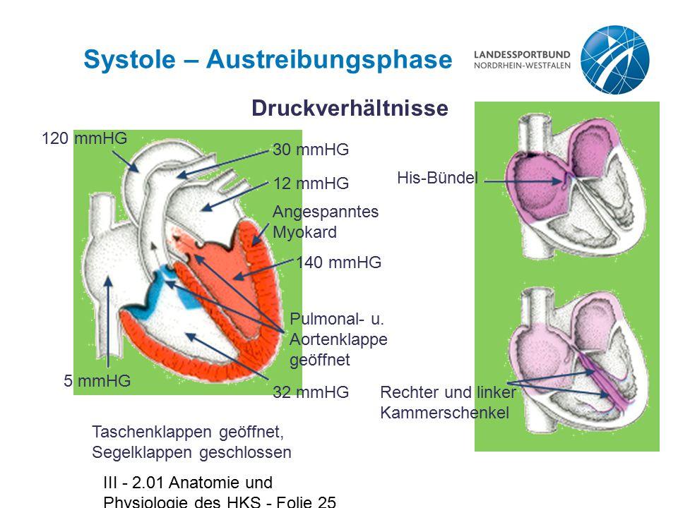 Niedlich Anatomie Der Aortenklappe Bilder - Menschliche Anatomie ...