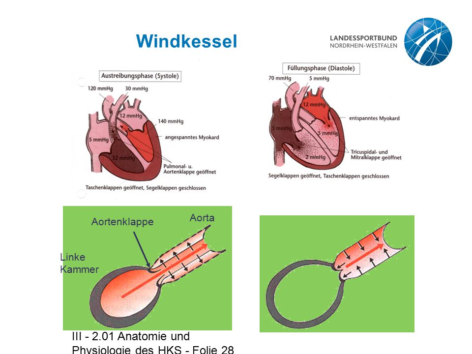 Windkessel III - 2.01 Anatomie und Physiologie des HKS - Folie 28