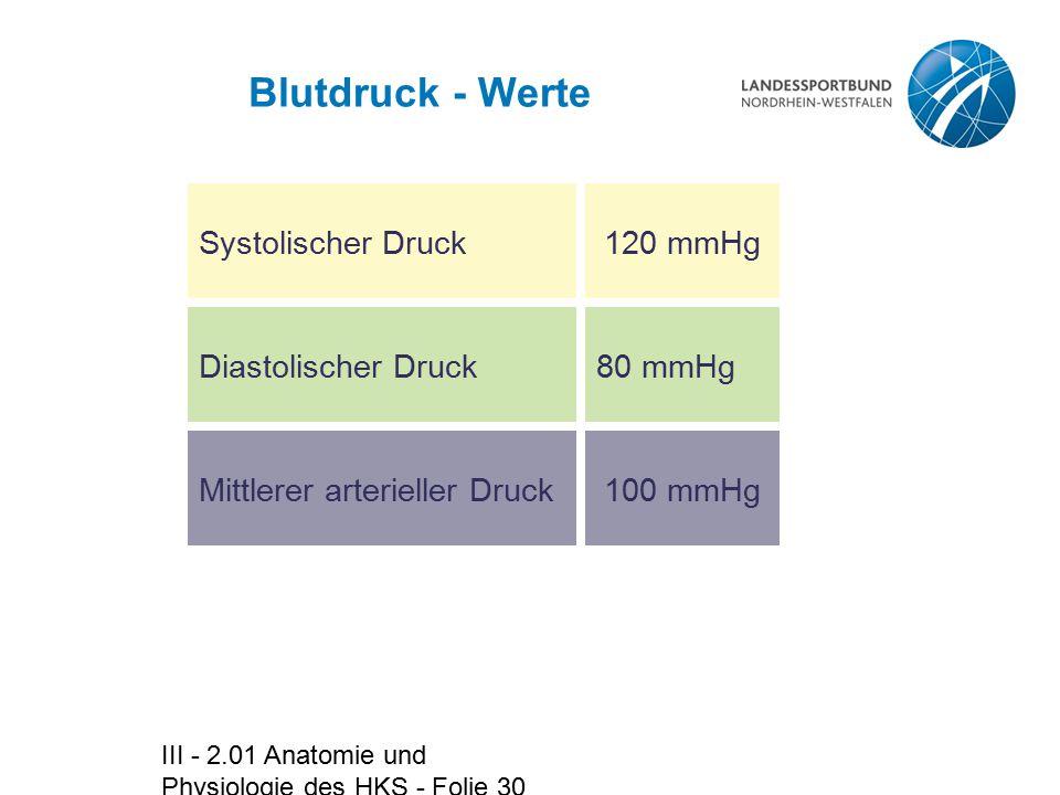 Erfreut Anatomie Und Physiologie Stammwörter Bilder - Anatomie und ...