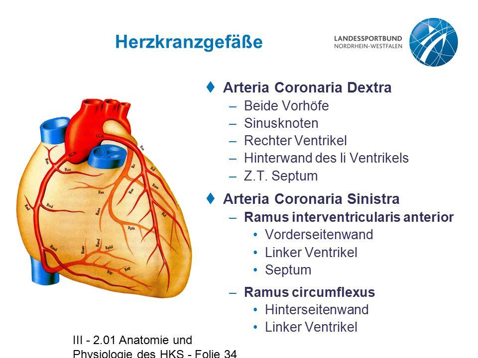 Herzkranzgefäße Arteria Coronaria Dextra Arteria Coronaria Sinistra
