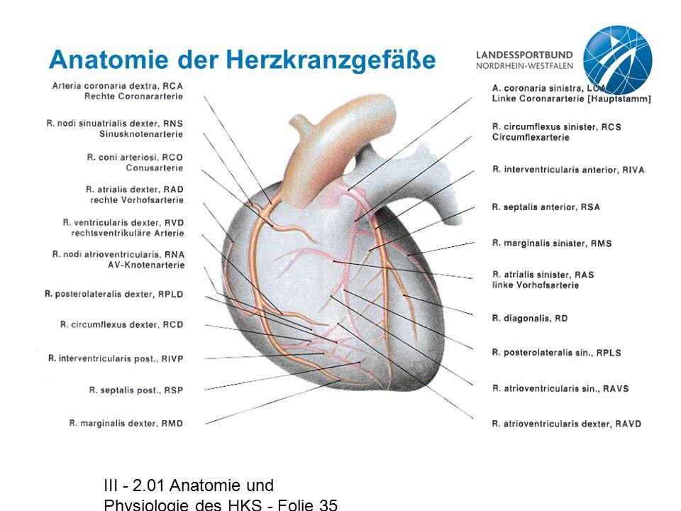 Anatomie der Herzkranzgefäße