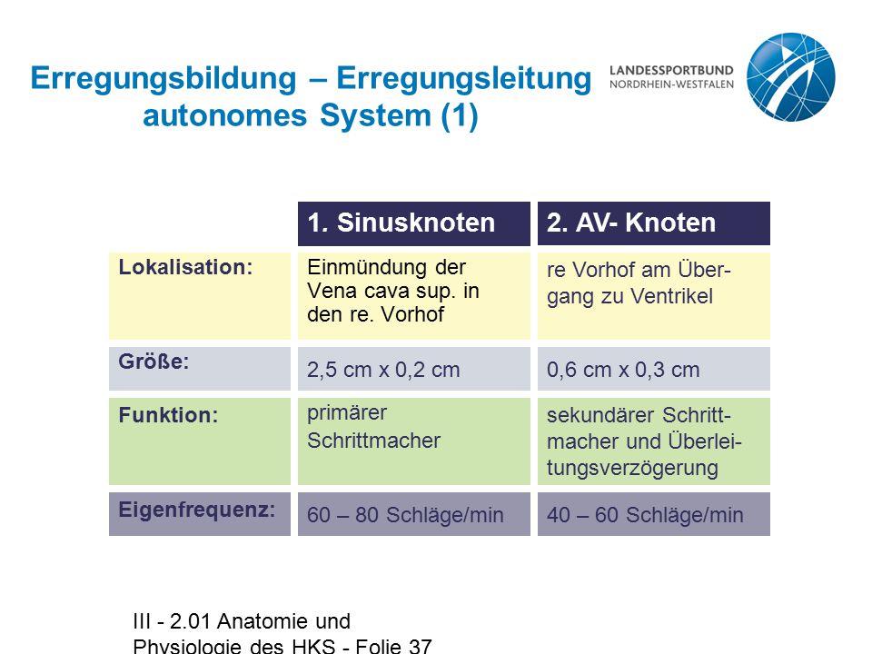 Erregungsbildung – Erregungsleitung autonomes System (1)