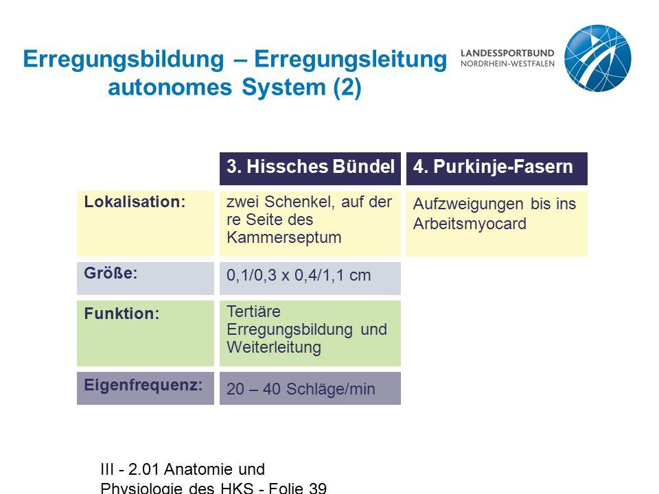 Erregungsbildung – Erregungsleitung autonomes System (2)