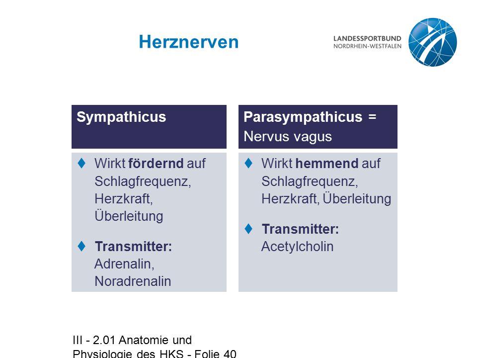 Herznerven Sympathicus Parasympathicus = Nervus vagus