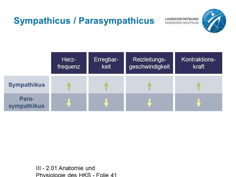 Sympathicus / Parasympathicus