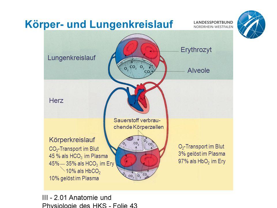 Körper- und Lungenkreislauf