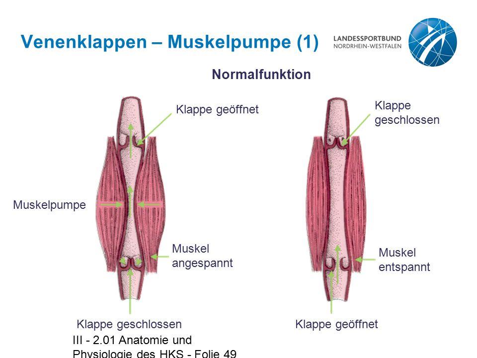 Venenklappen – Muskelpumpe (1)