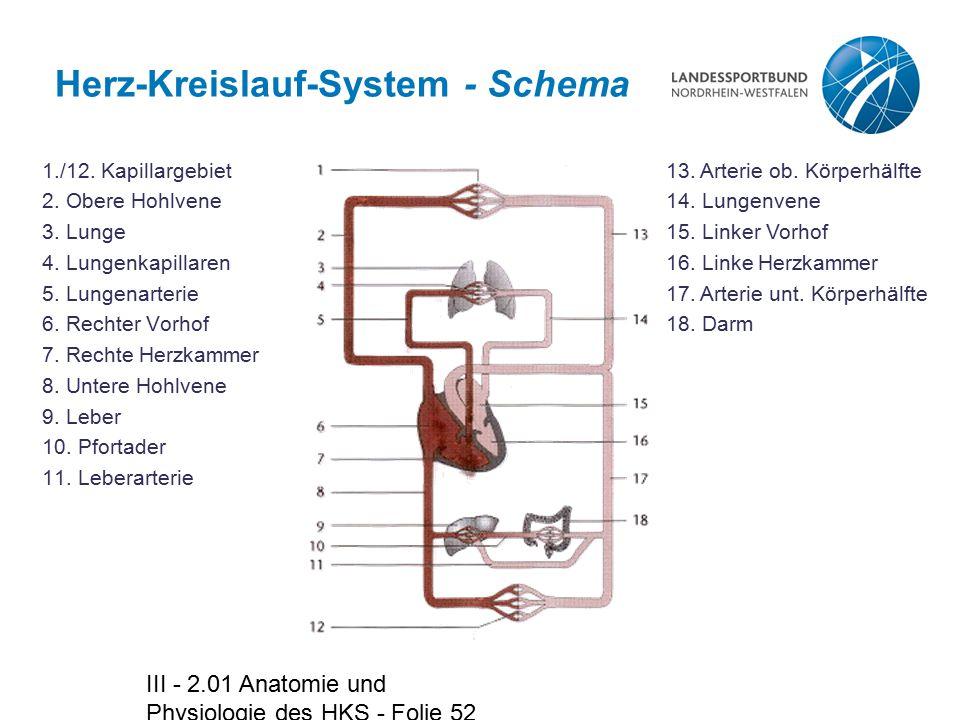 Herz-Kreislauf-System - Schema