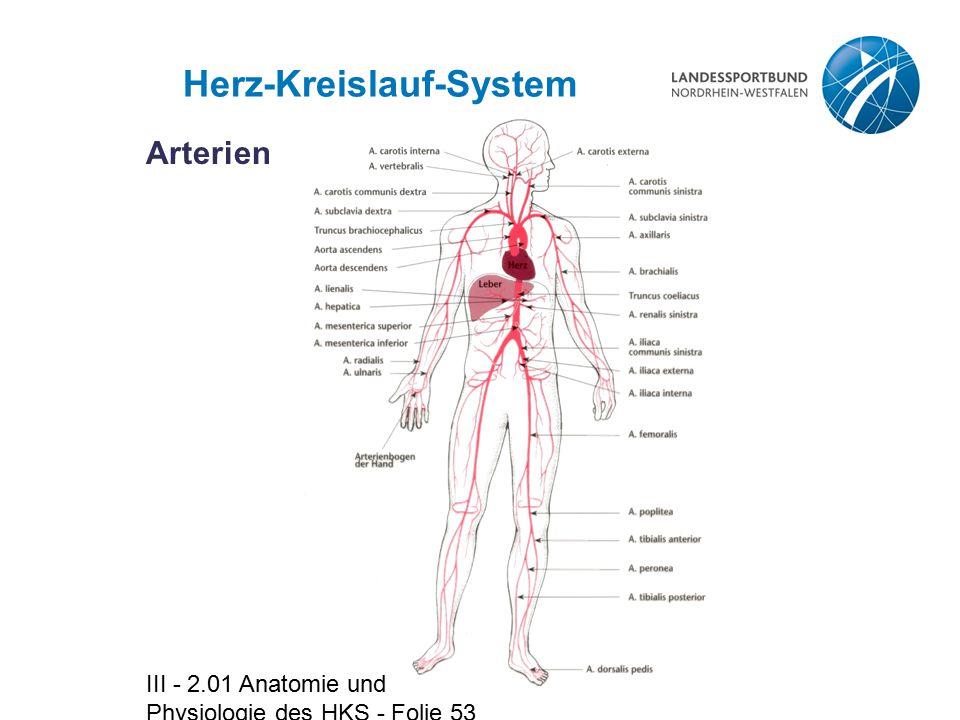 Schön Anatomie Kreislaufsystem Ideen - Menschliche Anatomie Bilder ...