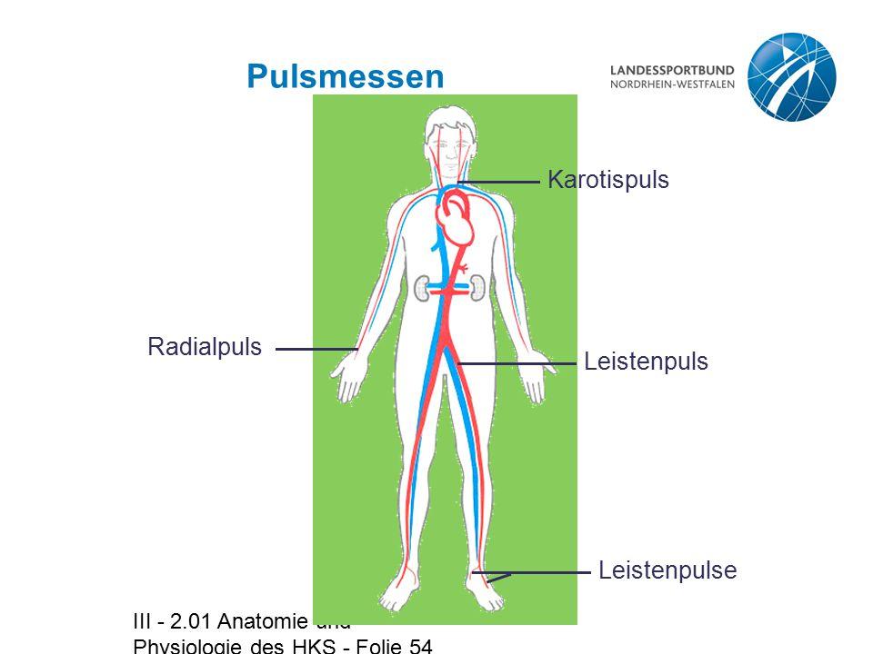 Pulsmessen Karotispuls Radialpuls Leistenpuls Leistenpulse