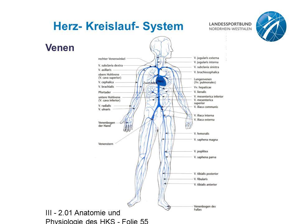 Herz- Kreislauf- System